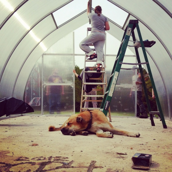 Cadillac thought we were building him a huge doghouse. But this greenhouse is nice and cozy with an R-3 rating