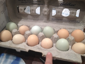 A sample dozen of our farm fresh eggs