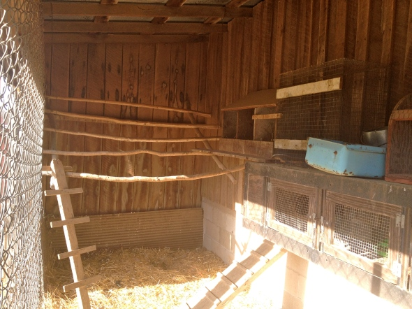 The outside coop is completely covered and has roosts, nesting boxes, a brooder box and a chicken door to the inside coop.