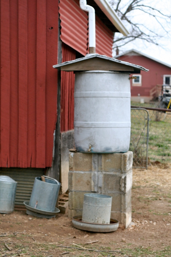 Outside, we built a rainwater harvester that provides them with drinking water.