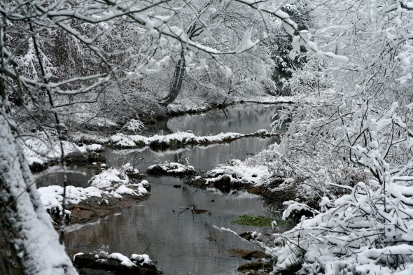The creek is Cadillac's favorite place at the farm... just not when it's snowing.