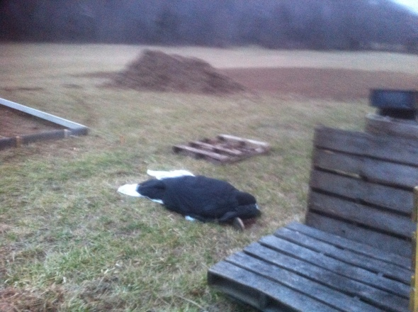 We found Rob one morning sleeping outside by the greenhouse site. He wanted to be one with his job site.