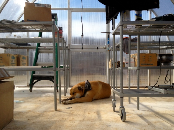 Cadillac really loves helping us work in the greenhouse