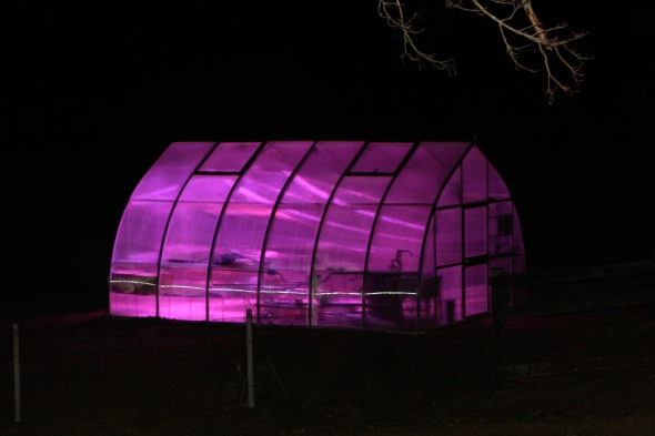 Glow in the dark greenhouse!