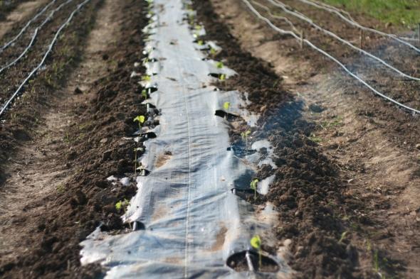 growing okra in zone 5 missouri