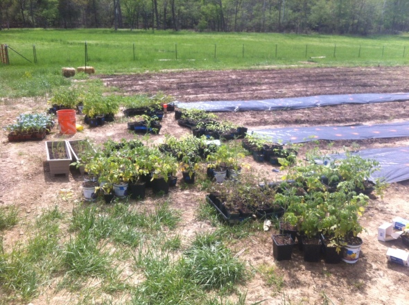 Transplants hardened off and ready to go!