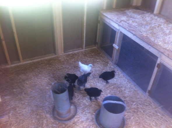 Welcome to your new home, Marans!