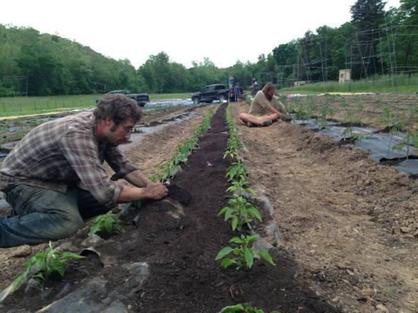 soilless fertilizer