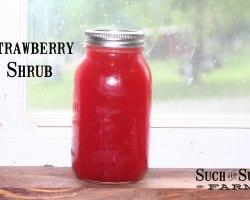 making homemade strawberry shrub