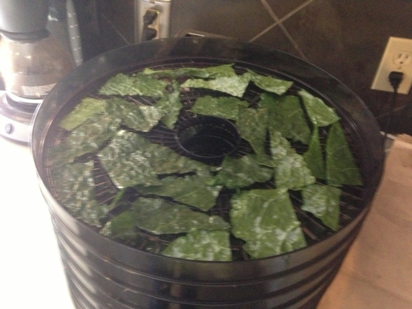 10 minutes later... delicious kale chips!