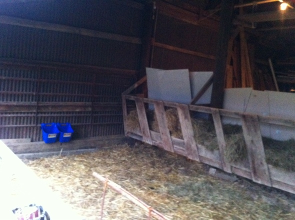 Inside the temporary goat barn: Blue hook over grain and mineral feeders. Straw/Hay feeder along the wall. AKA, goat escape route. Hence the concrete board barrier.