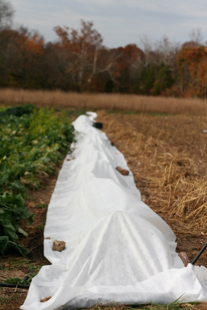 Frost blanket over the salad mix row. Sshhhh... it's sleeping.